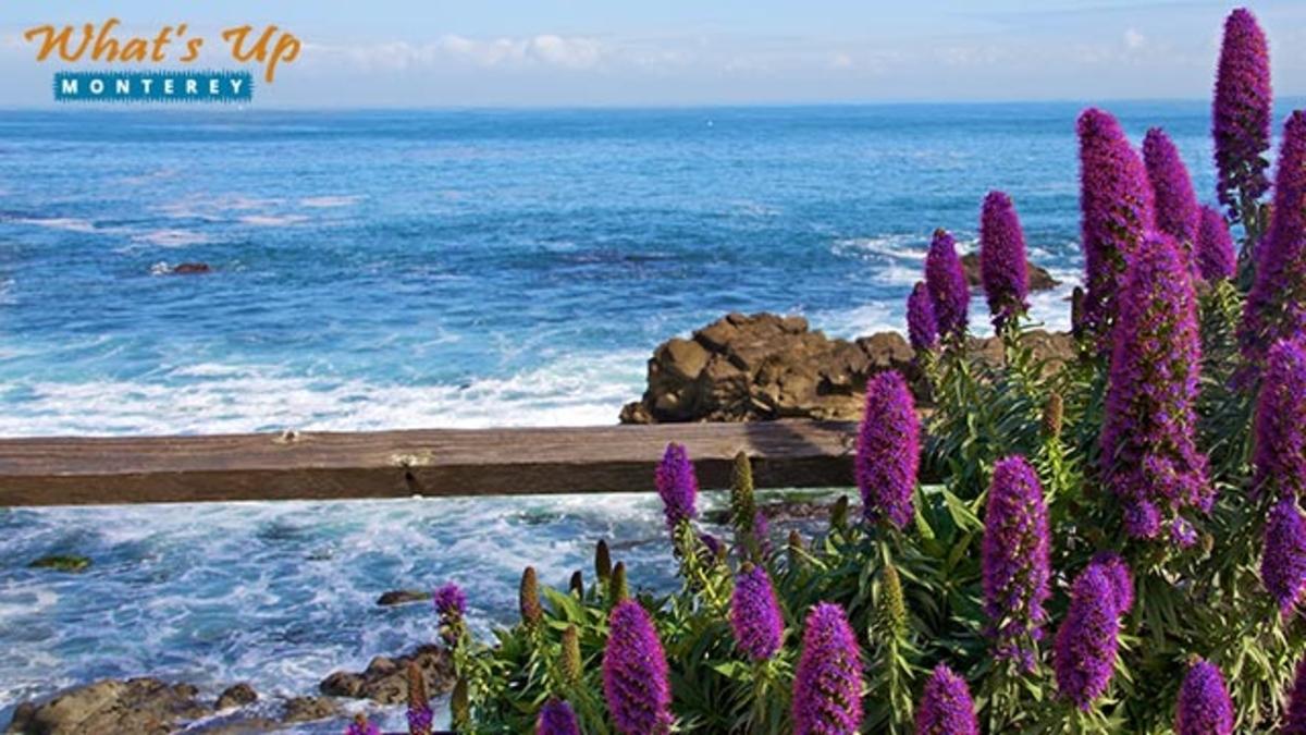 How to Spend Memorial Day Weekend in Monterey