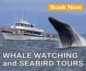 Monterey Whale Watching Tours