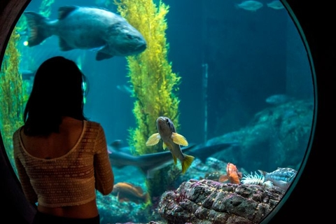Monterey Bay Aquarium Open House