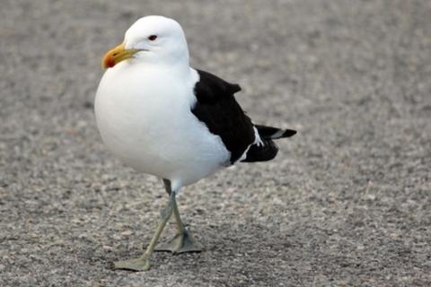 Asilomar Birds and Their Habitat Homes