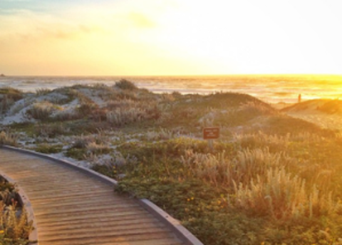 Asilomar Ramble: Free Tour of Historic Conference Ground
