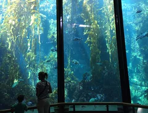 Monterey Bay Aquarium Open House