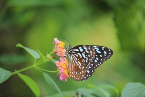 Science Saturday: Magnificent Monarchs