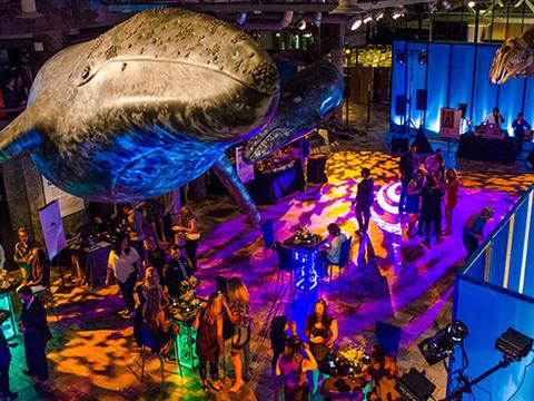 The Party at Monterey Bay Aquarium