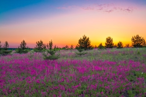 Free Asilomar Wildflower Walk