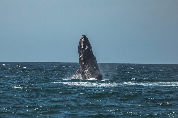 Discovery Whale Watch