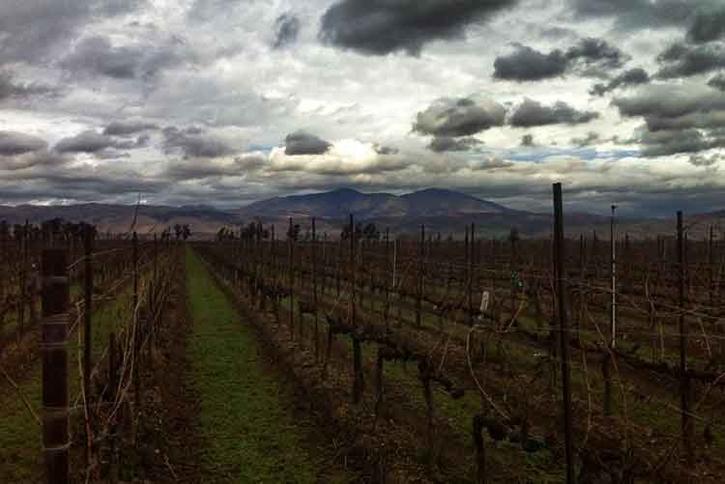 Ventana Vineyards